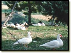 Assisi farm